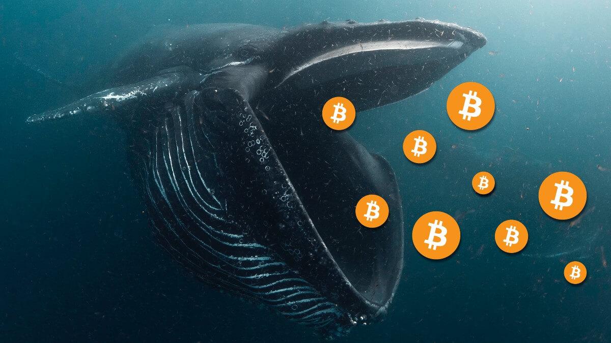 , Balinalar, Büyük İşlemler Gerçekleştirmeye Devam Ediyor